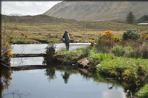 Fishing for trout in a river in County Mayo in the west of Ireland